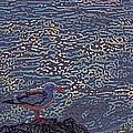 Seagull by Pamela Cooper