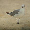 Gull by Sandy Keeton