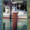 Seagull Triptych by Steve Ohlsen