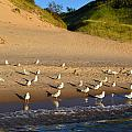 Seagulls At The Bowl by Michelle Calkins