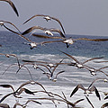 Seagulls Fly Over Surf by Raul Touzon