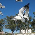 Seagulls On Anna Maria Island by Leontine Vandermeer