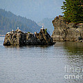 Seagulls On Rock by Leone Lund