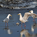 Seagulls Passion by Debra  Miller