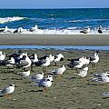 Seagulls Waiting  by Eve Spring