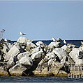Seaguls On Boulders In Lake Erie by Rose Santuci-Sofranko
