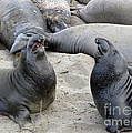 Seal Spa. Men's Talk2 by Ausra Huntington nee Paulauskaite