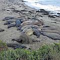 Seal Spa. Sand Bath by Ausra Huntington nee Paulauskaite