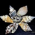 Seashell Floral by Maria Urso