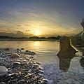 Seashells by Debra and Dave Vanderlaan