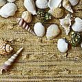 Seashells by Natalia Ganelin