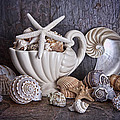Seashells by Tom Mc Nemar