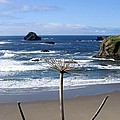 Seaside Solitude by Will Borden