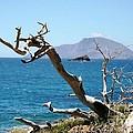 Seaside Tree by Phoenix Michael  Davis
