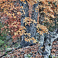 Season Change At Lost Maples by James Woody