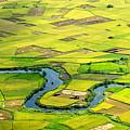 Season Grain by By Hoang Hai Thinh