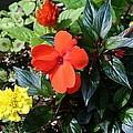 Seasonal Bouquet by Barbara S Nickerson
