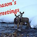Seasons Greetings Deer by DeeLon Merritt