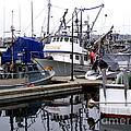 Seattle Fishermans Terminal by Kathy  White