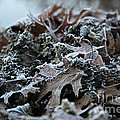 Seaweed And Oak Leaves by Susan Herber