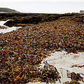 Seaweed Covered Beach by Dr Keith Wheeler