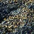 Seaweed by Daniel Smith