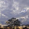Sedgeley Tree by Andrew Dinh