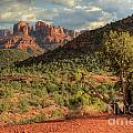 Sedona Red Rock Viewpoint by Sandra Bronstein