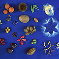 Seed Diversity, Barro Colorado Island by Christian Ziegler