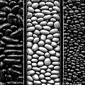 Seeds by Danuta Bennett