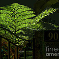 Selby Fern by Herb Paynter