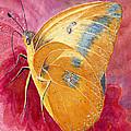 Self Esteem Butterfly by Charlotte Garrett