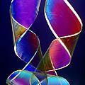 Sellotape, Light Micrograph by Dr Keith Wheeler