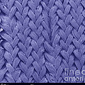Sem, Fastskin Fabric by Ted Kinsman