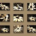 Sepia Daisy Flower Series by Sumit Mehndiratta