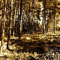 Sepia Forest by Jessica Hubner