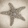 Sepia Starfish by Jim And Emily Bush