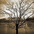Sepia Tree by Sheila Kay McIntyre