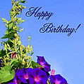 September Birthday by Kristin Elmquist