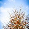 September Sky by Jan Bickerton