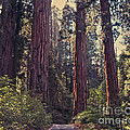 Sequoia National Park by Stephen Whalen