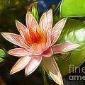 Serene Pink Waterlily  by Darleen Stry