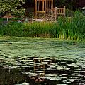 Serene Reflections by Marie Jamieson