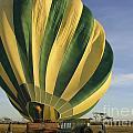 Serengeti Hot Air Baloon Inflating by Darcy Michaelchuk