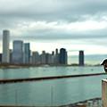 Serenity Of Chicago by Rafay Zafer