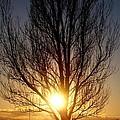 Setting Sun  by David Reese