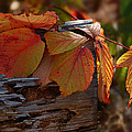 Shade In Fall by Susan Capuano