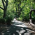 Shaded Paths In Central Park by Rob Hans