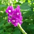 Shades Of Purple by Cheryl Matthew