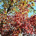 Shades Of Red by Kim Galluzzo Wozniak